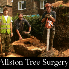 Ian_Allston_Tree+Surgery_ltd_logo